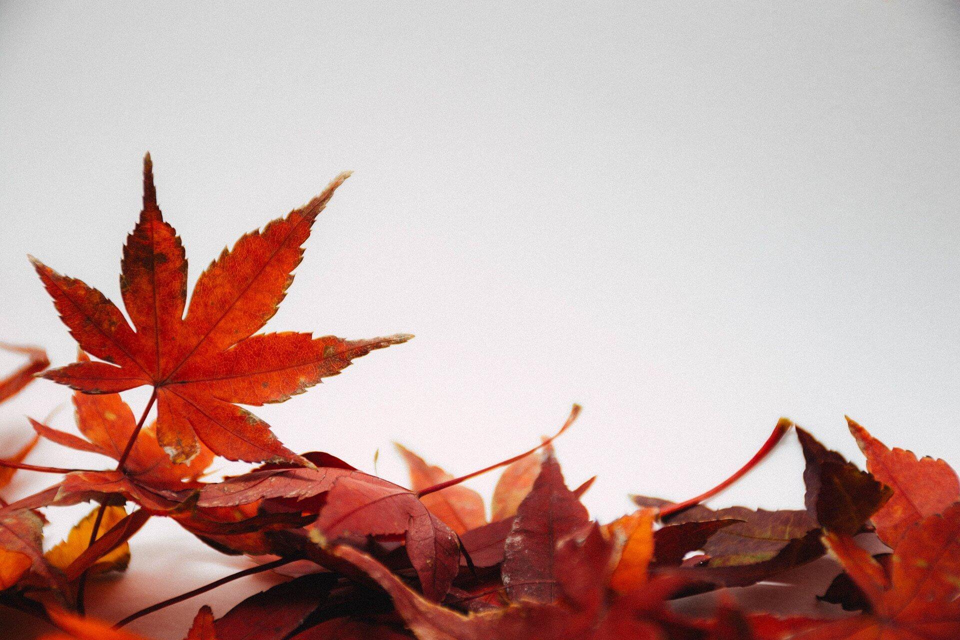 autumn-akcio-2021